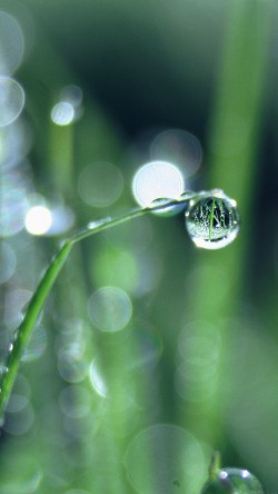 papers.co-mk61-bokeh-leaf-raindrop-nature-pure-33-iphone6-wallpaper