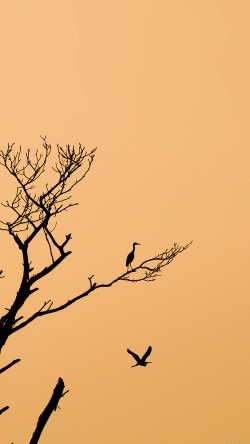 papers.co-mk96-bird-sunset-tree-nature-minimal-33-iphone6-wallpaper
