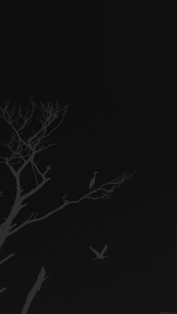papers.co-mk98-bird-sunset-tree-dark-nature-minimal-33-iphone6-wallpaper