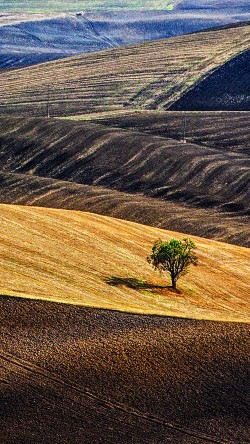 papers.co-ml24-desert-farm-nature-tree-lonly-33-iphone6-wallpaper