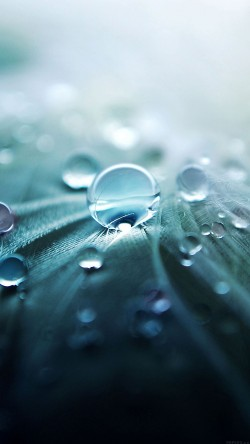 papers.co-ml53-raindrops-nature-leaf-art-green-33-iphone6-wallpaper