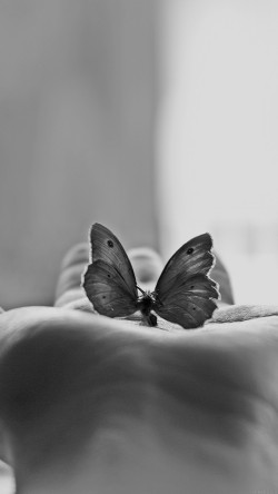 papers.co-ml80-butterfly-love-in-hand-animal-bw-33-iphone6-wallpaper