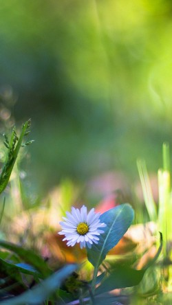 papers.co-mm92-green-lawn-flower-bokeh-nature-33-iphone6-wallpaper