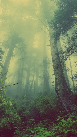 papers.co-mn31-forest-wood-fog-nature-green-33-iphone6-wallpaper