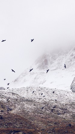 papers.co-mo73-winter-mountain-bird-rene-reichelt-nature-33-iphone6-wallpaper