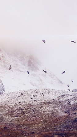 papers.co-mo74-winter-mountain-bird-rene-reichelt-flare-nature-33-iphone6-wallpaper