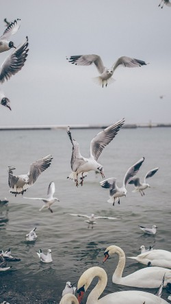 papers.co-mp68-seagull-sea-beach-port-nature-animal-33-iphone6-wallpaper