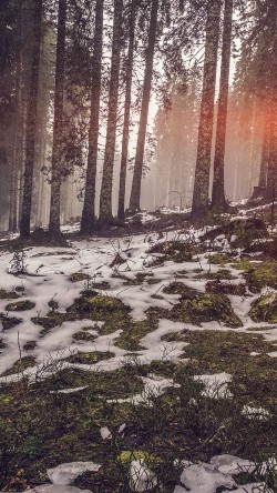papers.co-mq53-mountain-snow-woods-nature-flare-33-iphone6-wallpaper