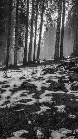 papers.co-mq54-mountain-snow-woods-nature-dark-bw-33-iphone6-wallpaper