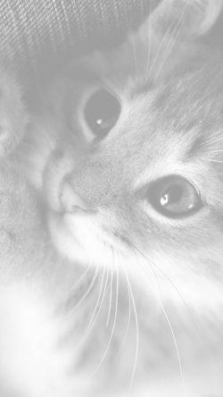 papers.co-mq78-cute-cat-kitten-nature-animal-white-33-iphone6-wallpaper