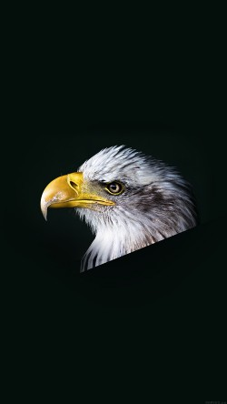 papers.co-mr64-eagle-dark-animal-bird-face-33-iphone6-wallpaper