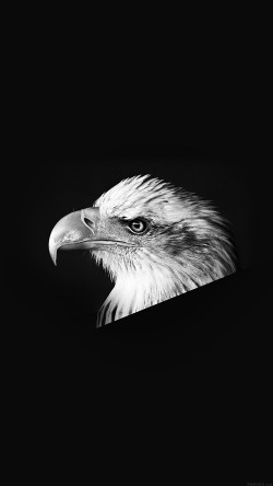 papers.co-mr65-eagle-dark-animal-bird-face-bw-33-iphone6-wallpaper