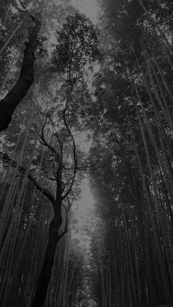 papers.co-mr96-tree-walk-street-nature-mountain-air-dark-33-iphone6-wallpaper