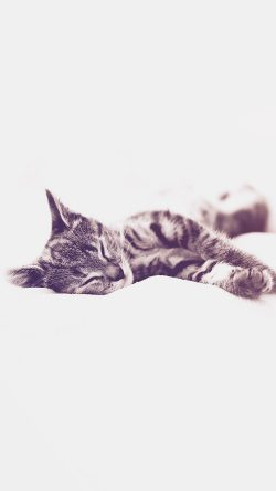 papers.co-ms26-sleepy-cat-kitten-white-animal-blue-33-iphone6-wallpaper
