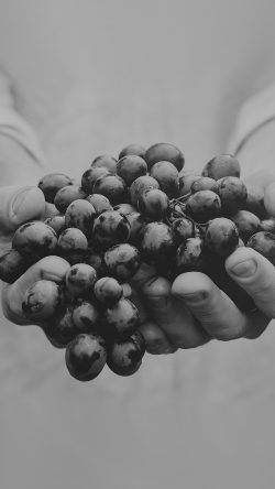 papers.co-ms43-farmer-food-grapes-fruit-nature-bokeh-dark-bw-33-iphone6-wallpaper