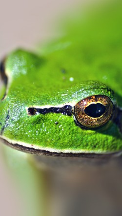 papers.co-ms78-eyes-frog-animal-lake-nature-33-iphone6-wallpaper