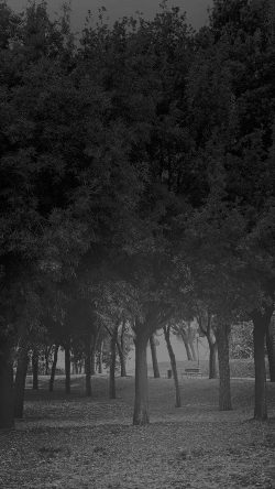 papers.co-mt14-tree-wood-grass-garden-dark-sun-light-nature-bw-33-iphone6-wallpaper