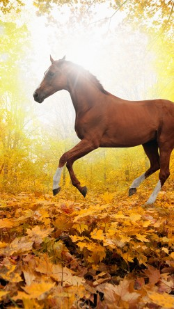 papers.co-mt30-horse-art-animal-fall-leaf-mountain-red-33-iphone6-wallpaper