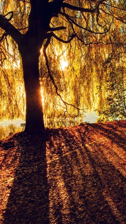 papers.co-mt35-morning-lake-tree-sunshine-nature-33-iphone6-wallpaper