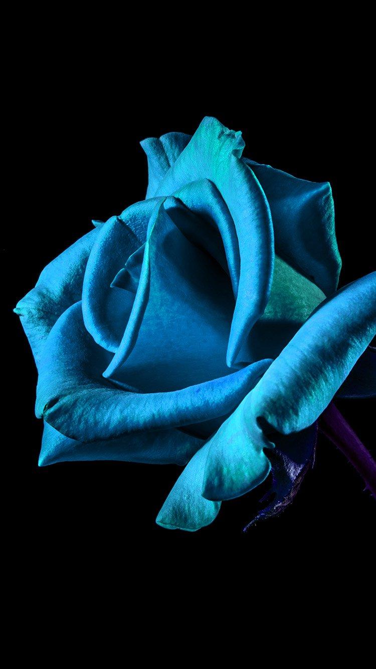 Iphone6papers Com Iphone 6 Wallpaper Mt52 Flower Rose Blue Dark