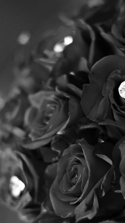 papers.co-mt88-flower-with-diamond-dark-bw-love-propose-33-iphone6-wallpaper