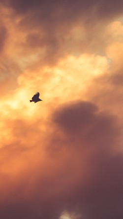 papers.co-mu07-bird-fly-sky-clouds-red-sunset-nature-animal-33-iphone6-wallpaper