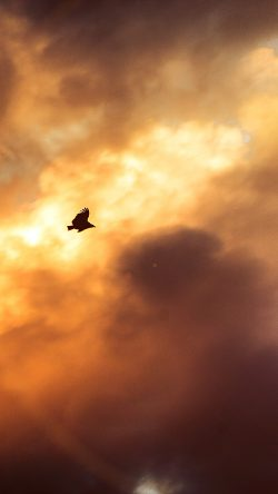 papers.co-mu08-bird-fly-sky-clouds-red-sunset-nature-animal-flare-33-iphone6-wallpaper