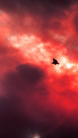 papers.co-mu09-bird-fly-sky-clouds-red-sunset-fire-nature-animal-33-iphone6-wallpaper