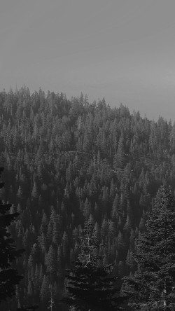 papers.co-mu52-tree-wood-mountain-nature-dark-bw-33-iphone6-wallpaper