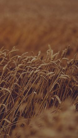 papers.co-mu92-fall-grass-nature-flower-dark-33-iphone6-wallpaper