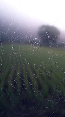 papers.co-mv02-morning-dew-spider-web-rain-water-nature-33-iphone6-wallpaper