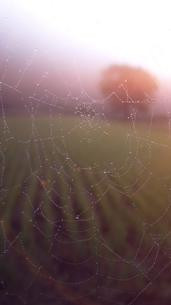 papers.co-mv03-morning-dew-spider-web-rain-water-nature-flare-33-iphone6-wallpaper