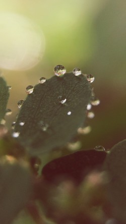 papers.co-mv13-nature-morning-dew-leaf-flower-rain-33-iphone6-wallpaper