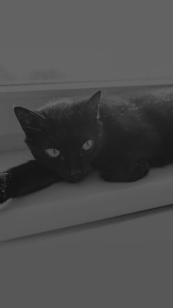papers.co-mv33-black-cat-animal-cute-watching-dark-bw-33-iphone6-wallpaper