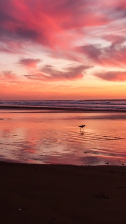 papers.co-mv55-sunset-beach-bird-red-orange-nature-sea-33-iphone6-wallpaper