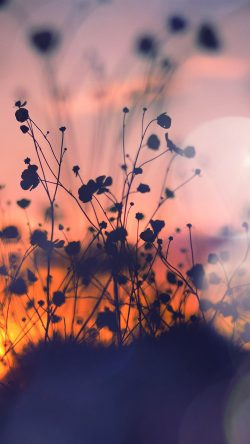 papers.co-mv66-night-nature-flower-sunset-dark-shadow-red-flare-33-iphone6-wallpaper