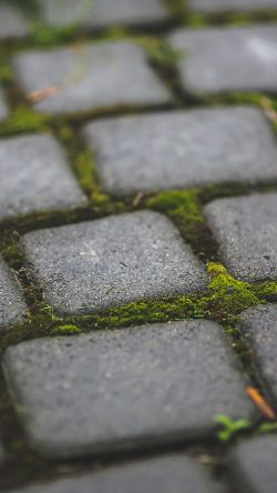 papers.co-mv87-garden-moss-stone-nature-road-city-33-iphone6-wallpaper