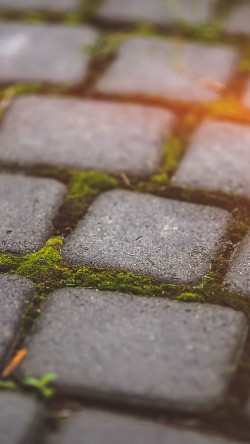 papers.co-mv88-garden-moss-stone-nature-road-city-flare-33-iphone6-wallpaper