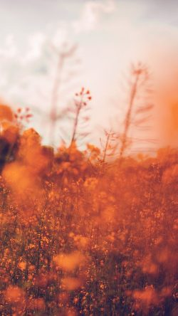 papers.co-mw21-nature-orange-flower-bokeh-spring-happy-33-iphone6-wallpaper