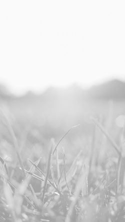 papers.co-mw49-grass-white-bokeh-light-summer-nature-33-iphone6-wallpaper