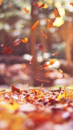 papers.co-mw78-fall-leaves-nature-tree-year-sad-flare-33-iphone6-wallpaper