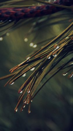 papers.co-mx06-rain-pine-tree-dark-green-nature-mountain-33-iphone6-wallpaper