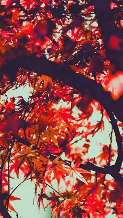 papers.co-mx13-fall-tree-leaf-autumn-nature-mountain-red-33-iphone6-wallpaper
