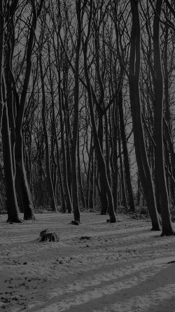 papers.co-mx21-cold-winter-forest-snow-nature-mountain-dark-bw-33-iphone6-wallpaper