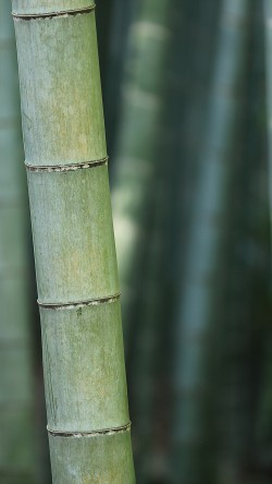papers.co-mx90-bamboo-nature-tree-green-33-iphone6-wallpaper
