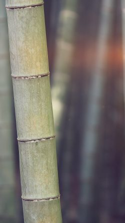 papers.co-mx91-bamboo-nature-tree-blue-33-iphone6-wallpaper