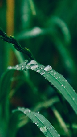 papers.co-my35-grass-drop-water-rain-nature-forest-33-iphone6-wallpaper