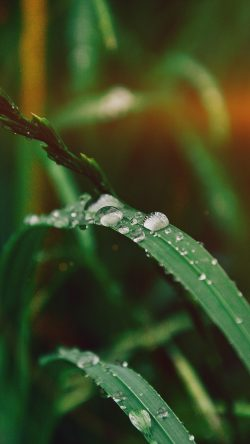 papers.co-my36-grass-drop-water-rain-nature-forest-flare-33-iphone6-wallpaper