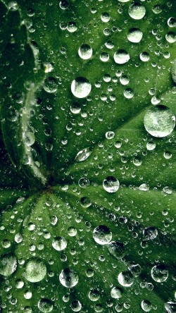papers.co-my46-water-drop-on-leaf-summer-green-live-33-iphone6-wallpaper