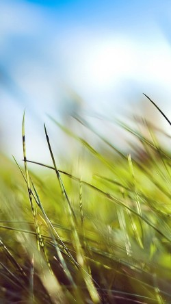 papers.co-mz10-nature-green-grass-bokeh-summer-33-iphone6-wallpaper